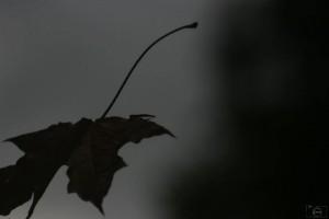 Autant en emporte le vent